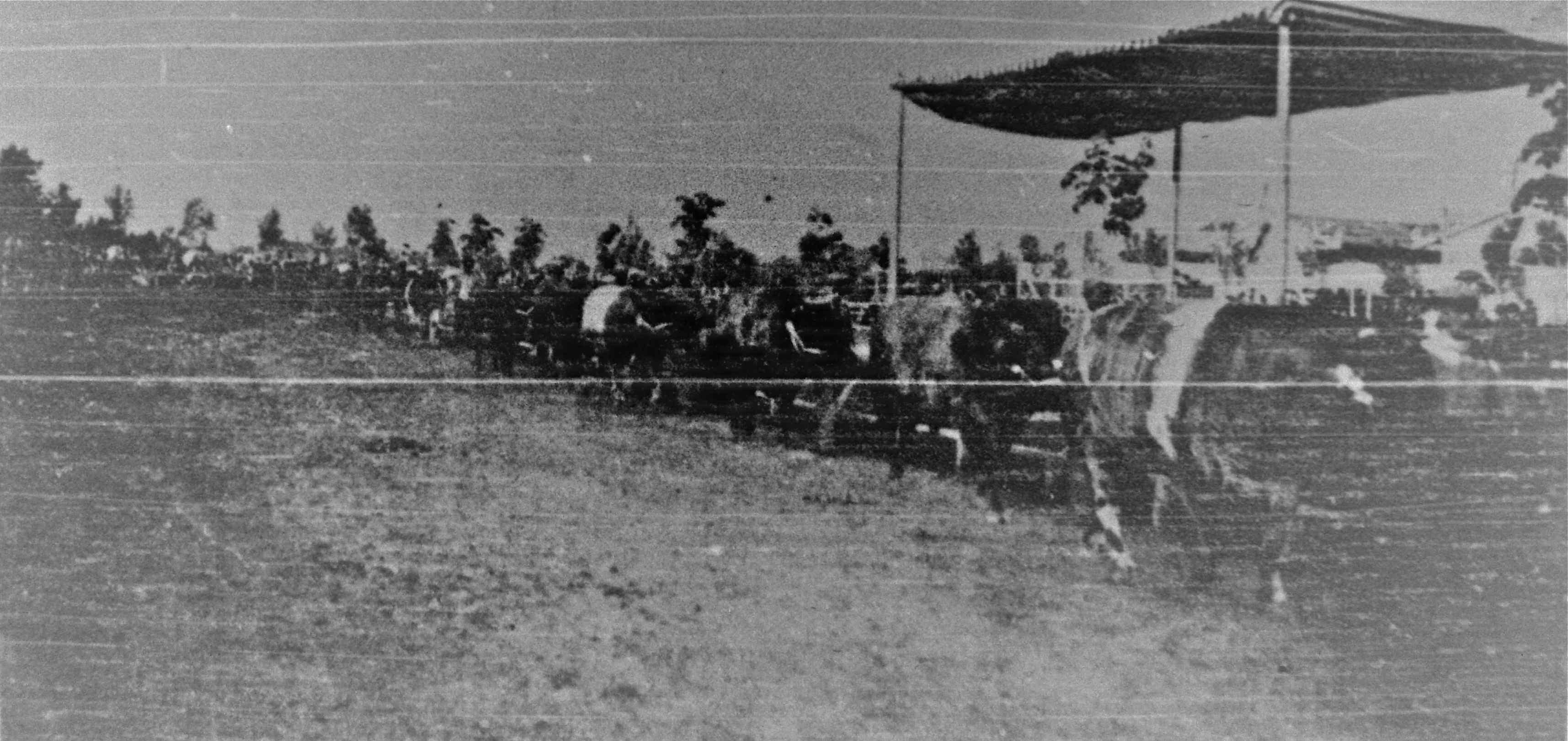 1907-11-17_ZigZagStgo; EsposicionAnimales (6foto003)_16032013.jpg